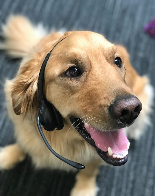 Redtail dog with a headset
